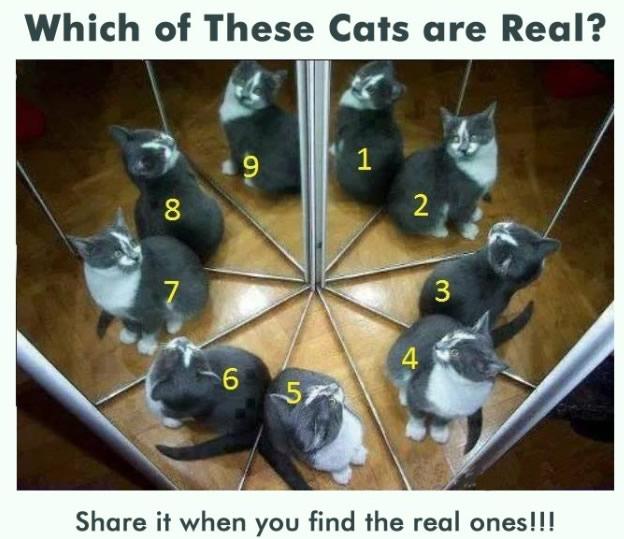 哪只是真猫?
