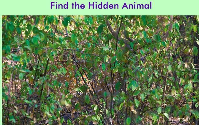 找出隐藏的动物